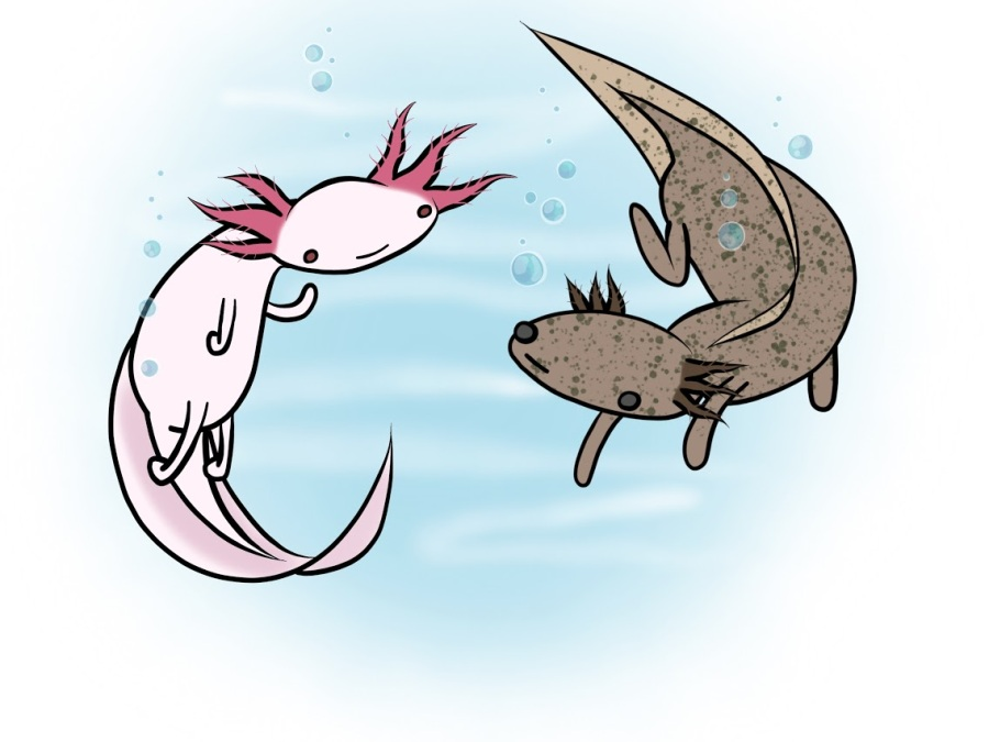 Axolotl-Artwork (1)